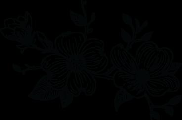 Hand-drawn image of dogwood flowers